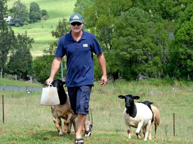 Scott Antcliff with his prize winning Dorper sheep at Tuckeroo stud farm.