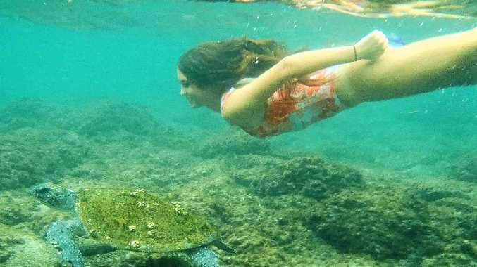 SPECIAL MOMENT: Sophie McIntosh-Smith swam with this turtle at the southern end of Seven Mile Beach, Lennox Head, recently. Her friend, Jess Davies, captured the moment.
