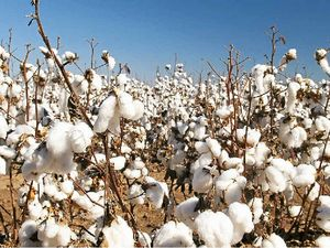Cotton famers asked to donate tarps for cyclone relief