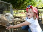 Adelaide Williamson (2) - feeding sheep and enjoying the school holiday activities on offer at the Heritage Village. Photo: Chris Ison / The Morning Bulletin