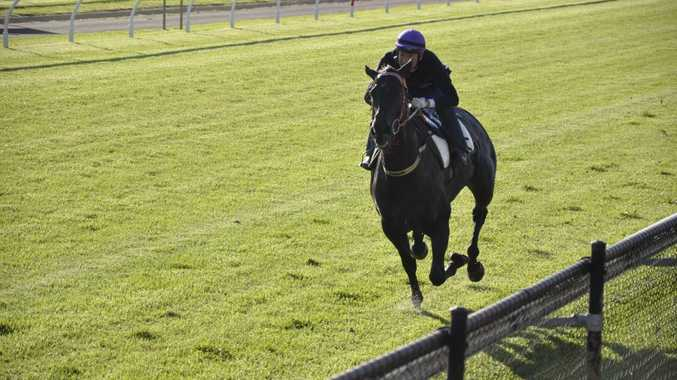 Miss Imagica goes through her final Weetwood hit-out for rider Manabu Kai at Tuesday's Clifford Park Breakfast With The Stars.