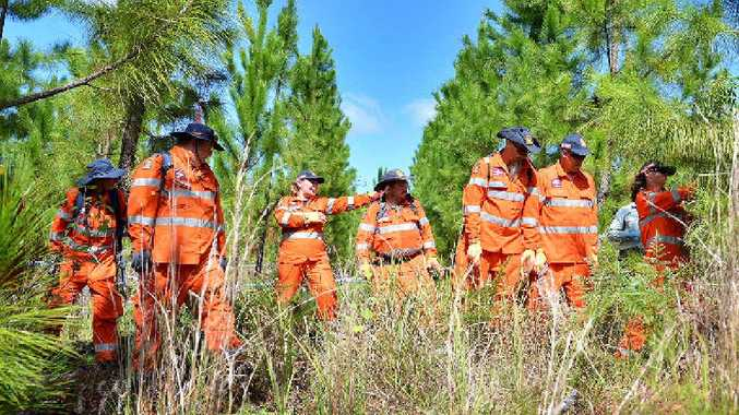 SES volunteers sweep the forestry near Tin Can Bay after the discovery of a skull on Thursday.