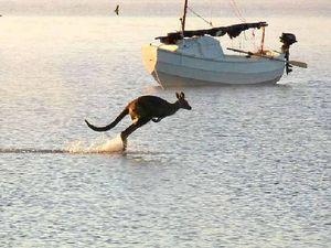 Holy hop! 'Kangaroo Jesus' snapped skipping across lake