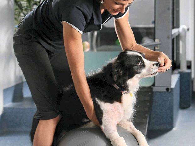 Animal physiotherapist Brooke Marsh helps bring pain relief and comfort to sick and injured pets.