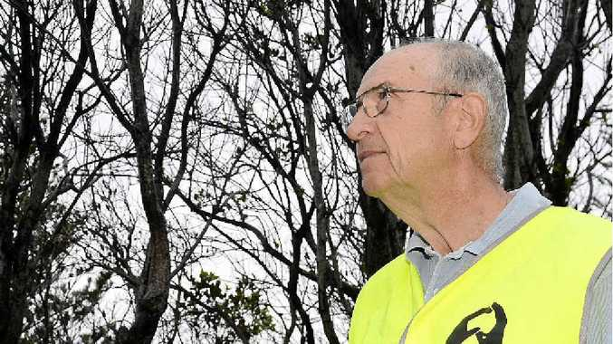 LEAVE THEM: Yamba Landcare's Paul Stephens on Yamba Hill near the dead trees which he believes were poisoned. Photo Debrah Novak