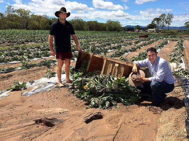 Justin Porter from the Eden Produce farm, north of Proserpine, and Member for Whitsundays Jason Costigan assess the damage to an eggplant crop.
