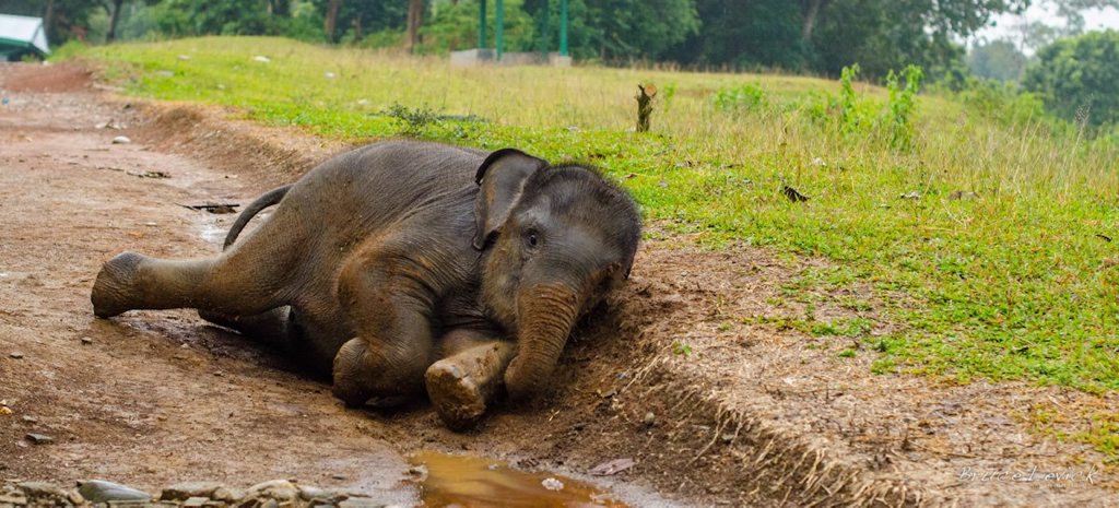 On four feeds a day, Bona regained her strength and became playful.