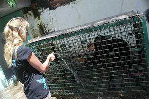 Johnny, the Sumatran sun bear gets some water.