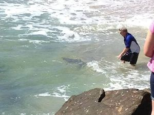 Fisherman tries to catch small shark by hand