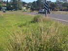 DERSERVED BETTER: Weeds are left to grow on the corner of Cunningham Hwy and Ipswich-Rosewood Rd where the Royal couple went past on Saturday.