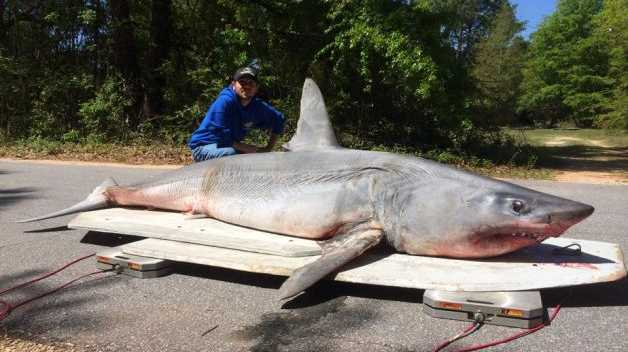 Joey Polk with the his shark which was was 3.35m (eleven feet) long and weighed 365kg (805 pounds) Photo: Earnie Polk