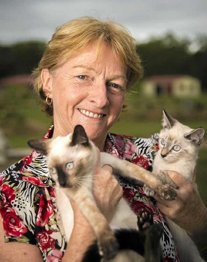 RSPCA cat co-ordinator Betty Bridge with Shantae and Shai, available through the RSPCA cat adoption program.