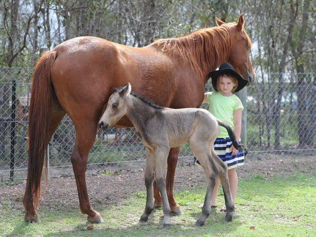 Amarni McCarroll, 6, from Walligan with Bindi and her new foal Kokoda born on Anzac Day.