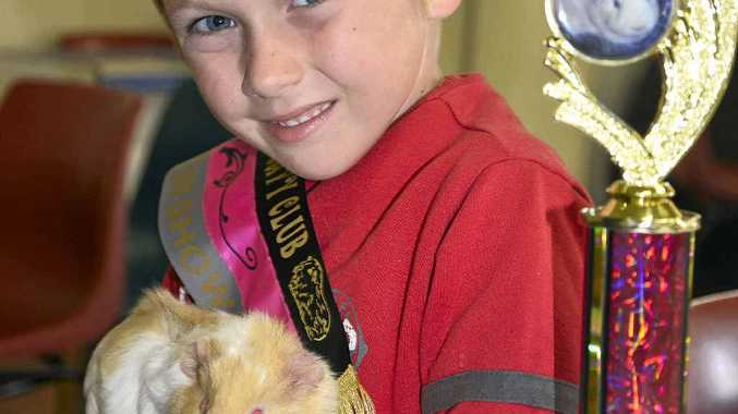 Covey McInnes, of Clifton, with the winning pet guinea pig owned by Allora couple Paul and Kristel Allie.