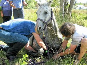 Firefighters rescue trapped horse from muddy bog