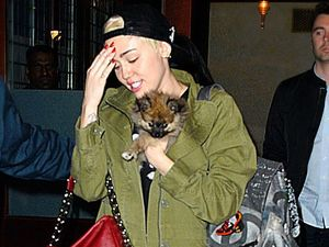 Miley on the mend after allergy hamstrings Bangerz tour
