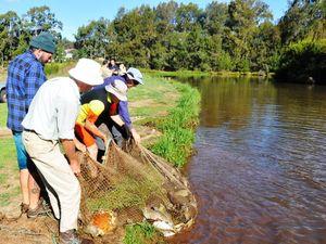 Hunt for exotic pest turtles in Toowoomba waterways