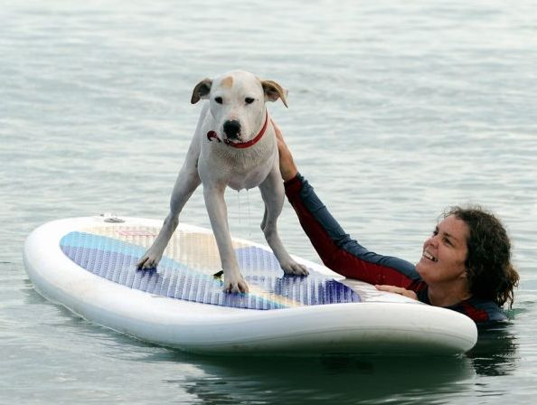 Dudley may only have three legs but that doesn't stop him from enjoying all aspects of a dog's life. He is pictured with his guardian Marie Barnes at Scarness. Photo: Robyne Cuerel / Fraser Coast Chronicle