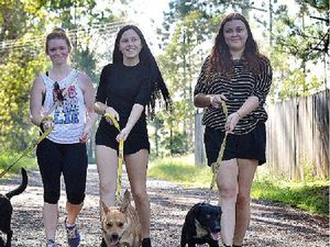 Taking great strides in aid of dogs