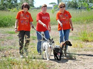 Paws hit the road to raise funds for RSPCA programs