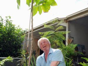 Man's 'special tree' given away to Tinana woman