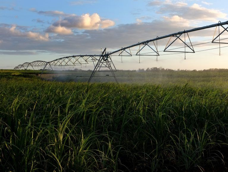 Some farmers are choosing not to irrigate their crops because they can't afford the electricity for the pumps.