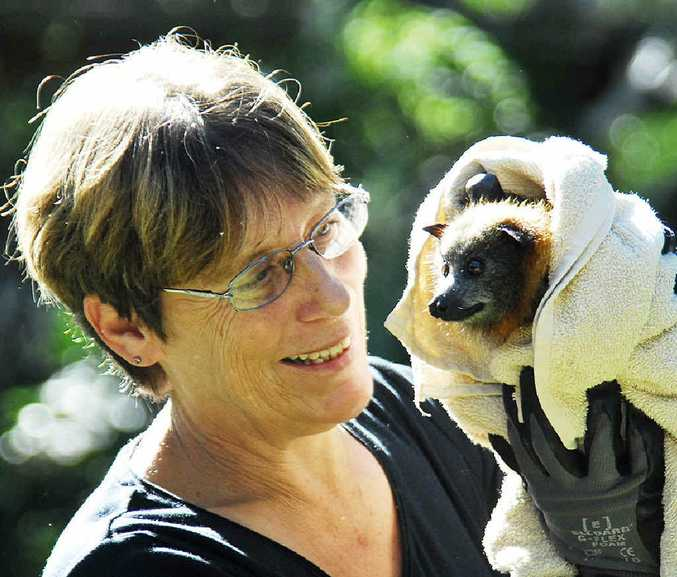 SPECIAL CARE: Connie Kerr is a wildlife carer for Bat Conservation and Rescue Queensland Inc. and will hold an information course on how to care for bats.