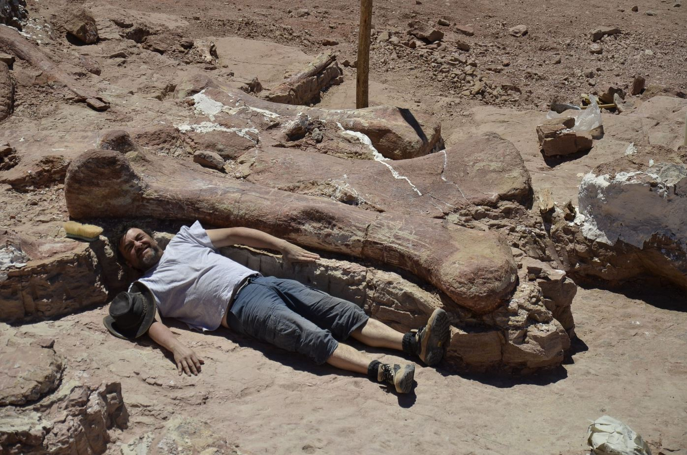 Egidio Feruglio Paleontological Museum showing a technician next to a dinosaur fossile -- likely to be the largest ever to roam the earth-- in Chubut, some 1,300 kilometers (800 miles) south of Buenos Aires.