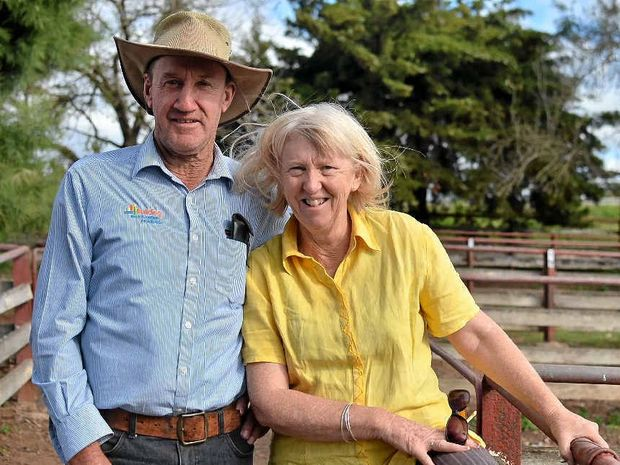 WEATHER WISH: Wallangarra's Bob and Sue Jurd sold culled Dorper ewes for $86 a head at the Warwick sheep sale.