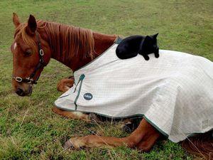 Yee-hah! Ride 'em cat-boy!