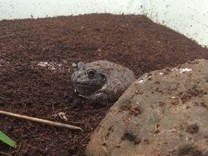 Macadamia Castle unveils new Frog Conservation Pod