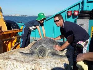 Huge green turtle released after recovering at Quoin Island