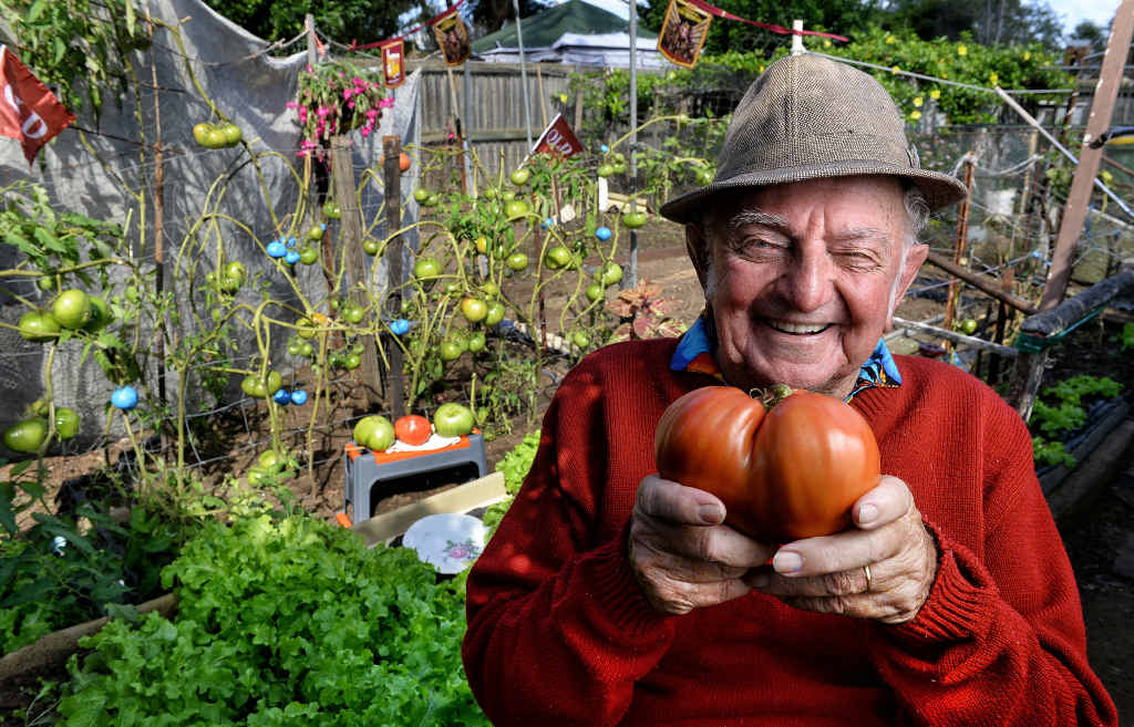 HAPPY GROWER: Kev Peters from Leichhardt with one of his massive tomatoes. He grew it for the start of State of Origin.
