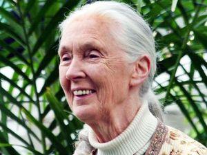 Dr Jane Goodall to be honoured at Australia Zoo next Sunday