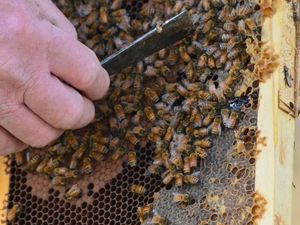 800,000 bees kill gardener in horror swarm attack