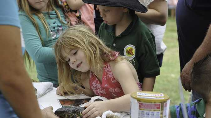 Tarnie Evison, 6, with one of the lizards at Ecofest.