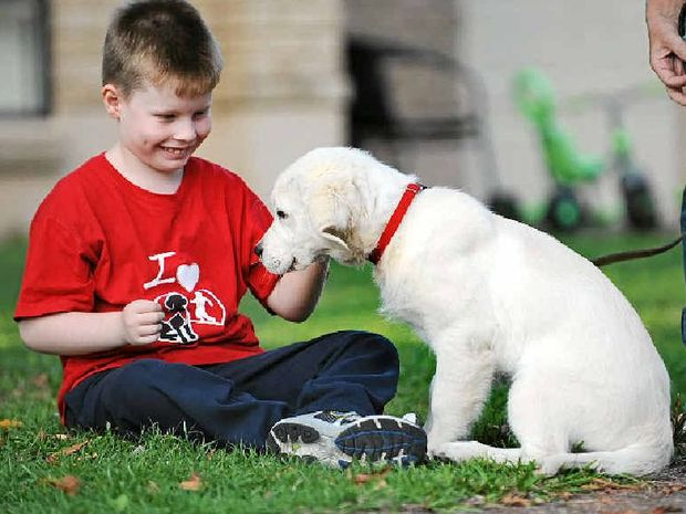 GOOD FRIENDS: Jack McGlynn, 7, has autism and Prader-Willi Syndrome, and his mum Kylie is hoping to raise $15,000 to get a Smart Pup for him, like this golden retriever puppy.