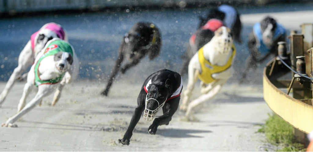 TWILIGHT MEETING: Thursday racing at Grafton Greyhounds starts at the later time of 4.12pm today.