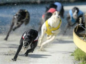 Leaked phone call strikes blow to greyhound industry