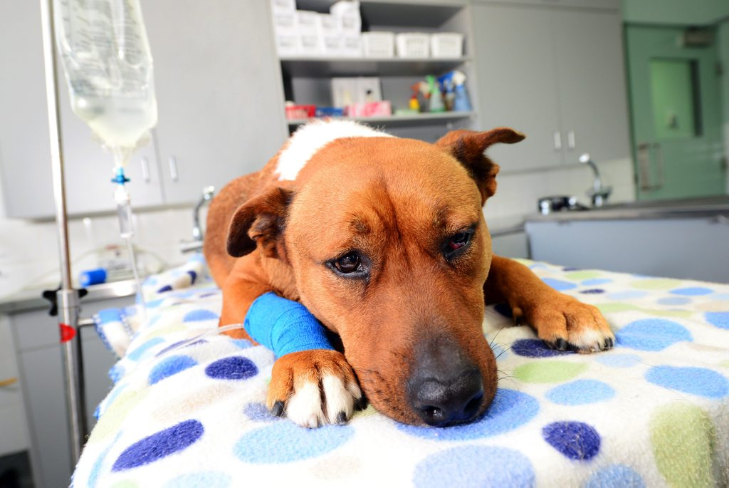 THE Boyne Tannum Vet Surgery is warning pet owners of an increasing number of parvo virus cases across the Gladstone region.