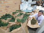 Detectives find sophisticated hydroponic crop