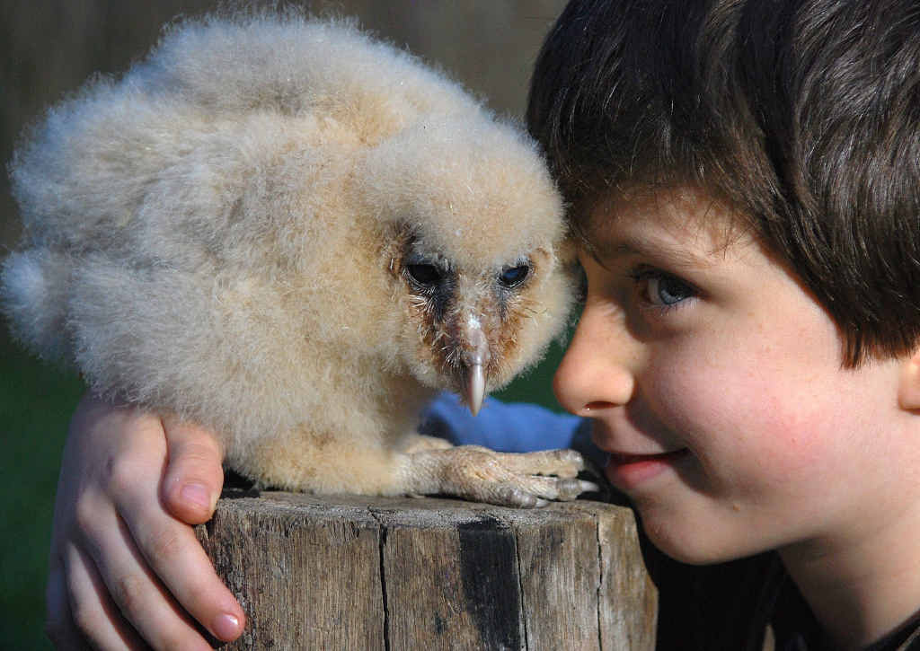 HE'S RAPT: Levi Jordan with the latest addition to his family's collection of birds, an unnamed 12-week-old baby owl.