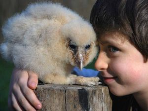 Warning: Cuteness overload! 'Oh baby, life's a hoot'