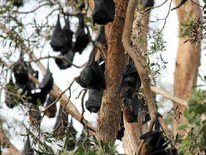 Just 'help us please' say Noosa  locals driven batty