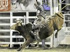 A bull does its best to dislodge its rider at the Bulls and Barrels rodeo at Miriam Vale.