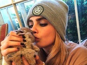 Cara Delevingne wants V Festival VIP area for rabbit