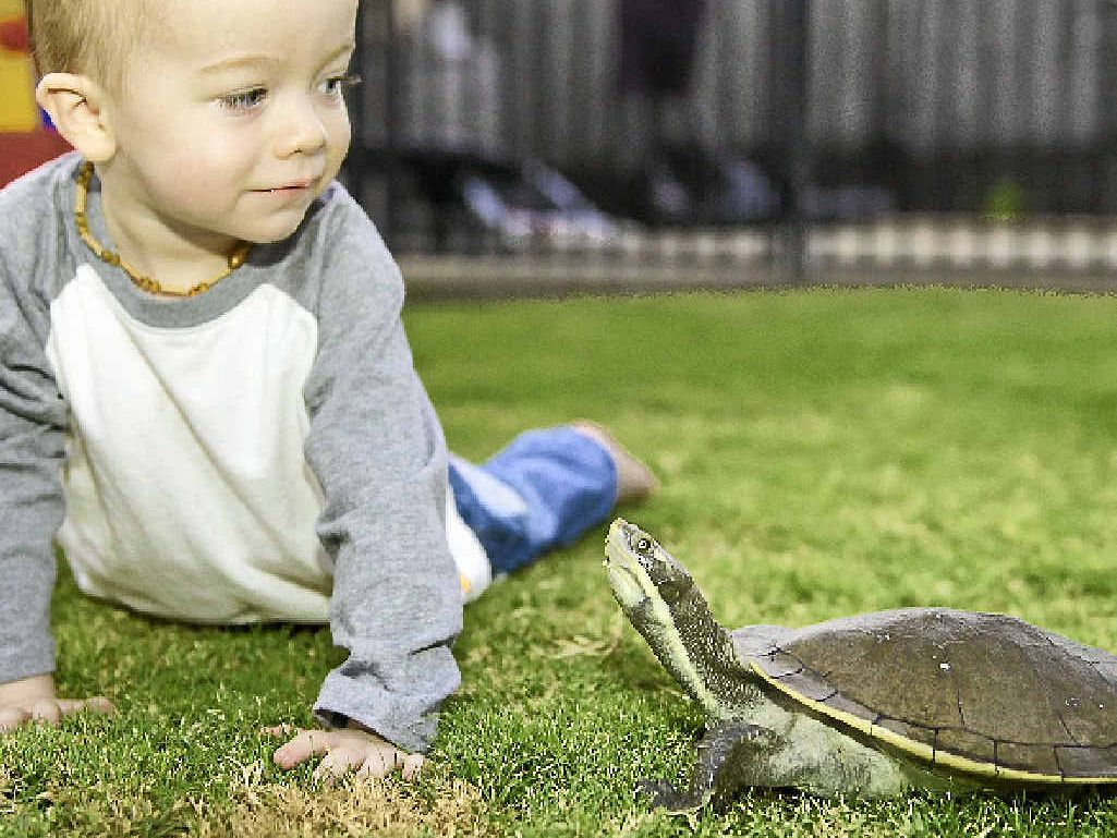 PLAY MATES: Harrison Warry with the family turtle, Speedy.