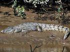 Missing croc eggs presumed to be stolen