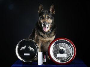 Heroic police dog Bosun dies in handler's arms