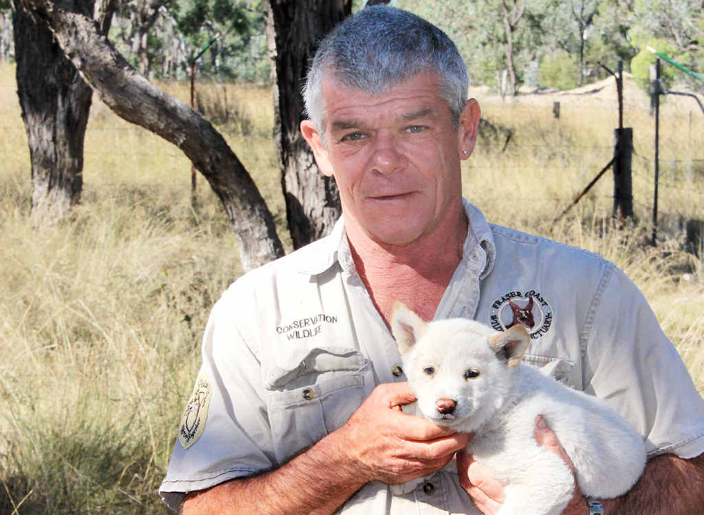 A FRASER COAST FIRST: Ray Revill with his rare white dingo pup, Spirit.